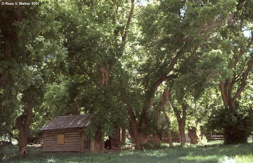 harper utah ghosttown tree cottonwood 9milecanyon cabin logcabin