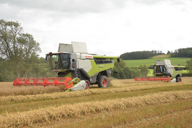 Claas Lexion 7500 Combine Harvesters cutting Spring Oats