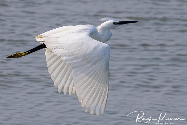 Egret Series