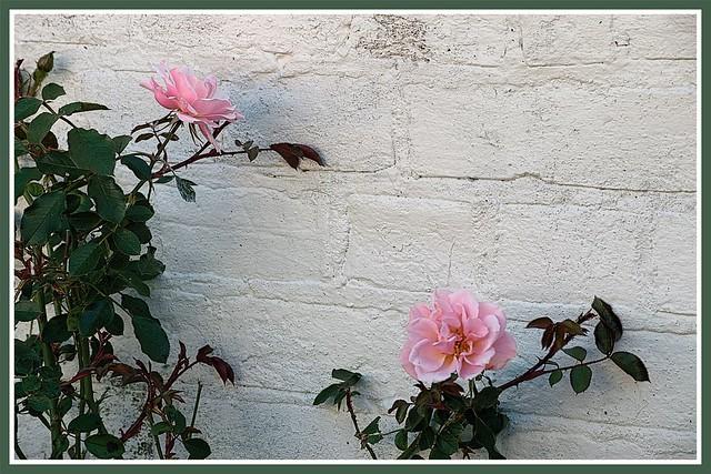 Wall flowers.