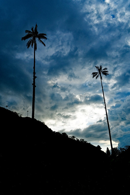 Darken modus - Great Palms