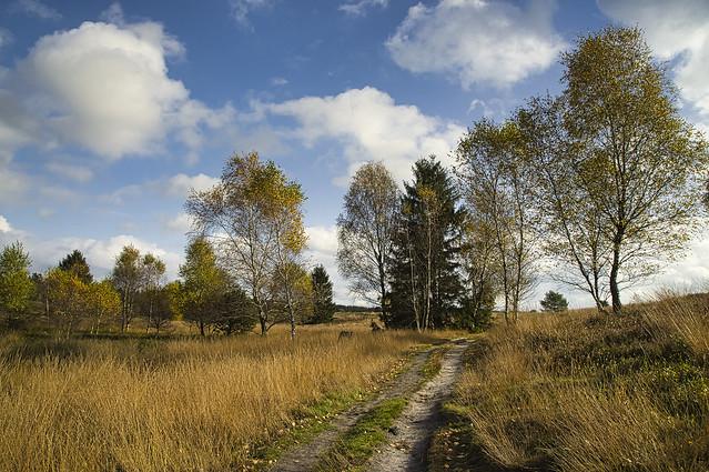 Herbstliche Impressionen ....