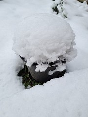 flower pot covered in snow