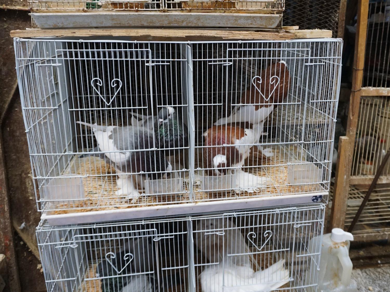 Fes medina pigeons