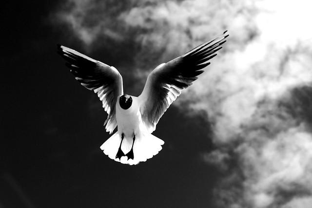 Nicht die Taube