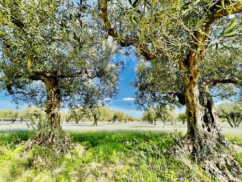 My land in Sicily | by giorgiogeraci