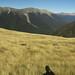 Nelson Lakes - Pinchgut - Paddys Loop Track 002