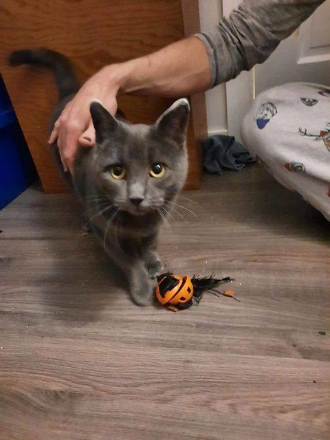 LOST: Grey cat in #ForestLawn. Call 403-402-6654. Pls RT, share to help find Elsa. MISSING KITTY IN FOREST LAWN... 42 STREET SE AND 10 AVE SE. PLEASE CONTACT ME IF SEEN OR FOUND. 4034026654 🙏😪🐈⬛ Elsa is very sweet just