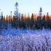 Sunrise, Algonquin Provincial Park, Ontario
