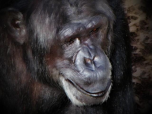 Taken at Hamilton Zoo NZ 10 years ago.