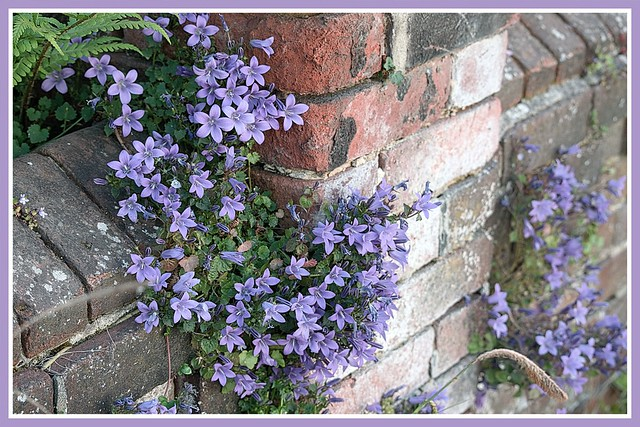 What grows on walls, stays on ..........