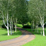 Tree lined at Miller Park, Preston