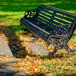 Empty bench at Haslam Park, Preston