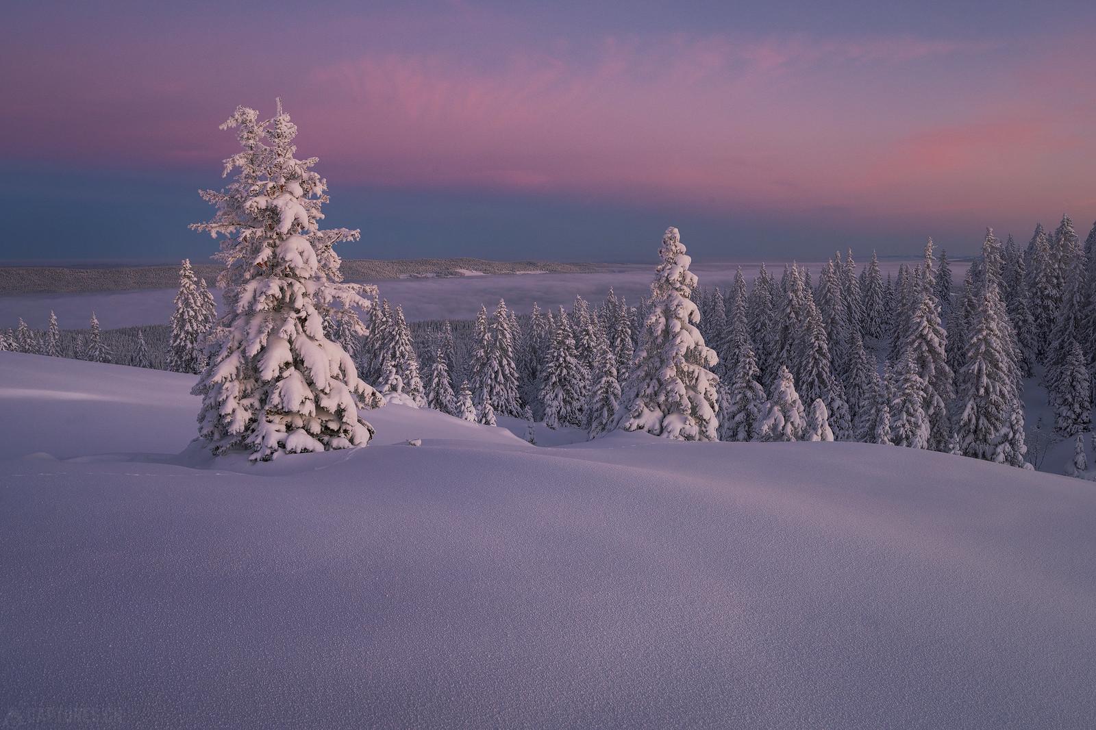 White trees - Jura