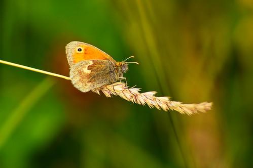 Moth at Herrington Country Park (1)