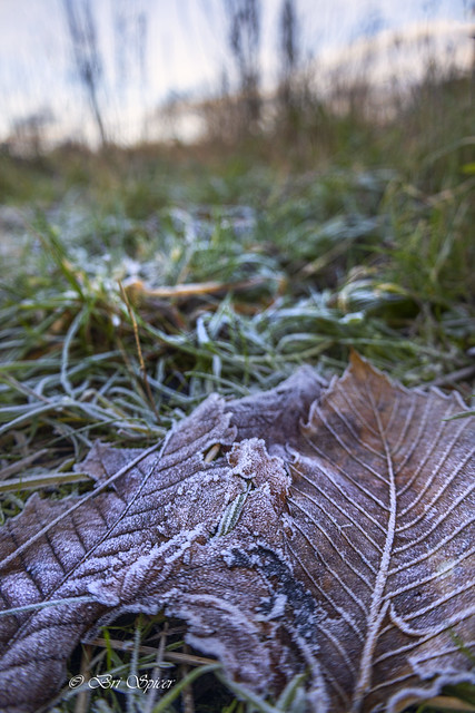 Frosted spine