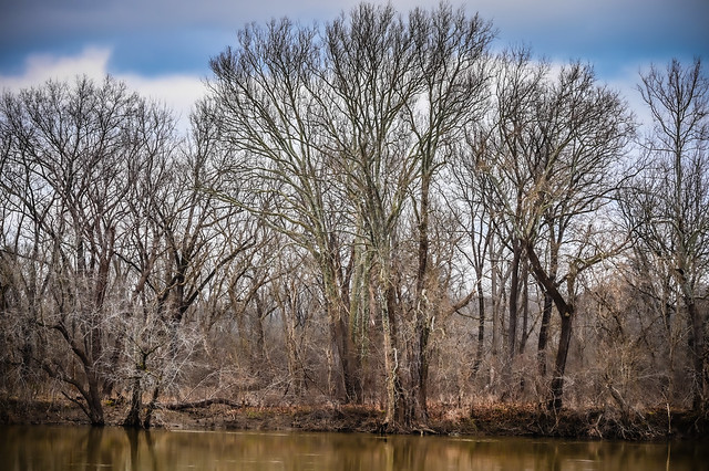 Maryland riverbank along the Potomac River in Winter viewed from Algonkian Park Sterling VA