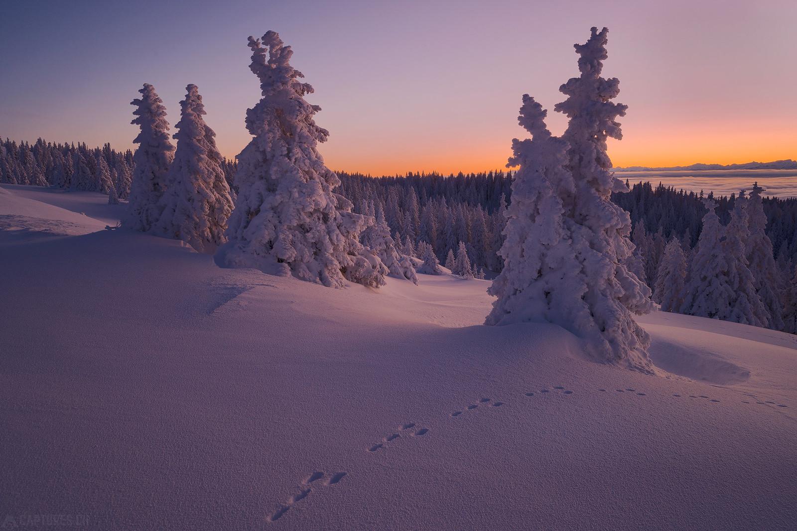 Tree line - Jura