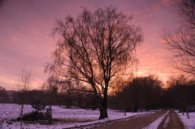 Winter tree on fire