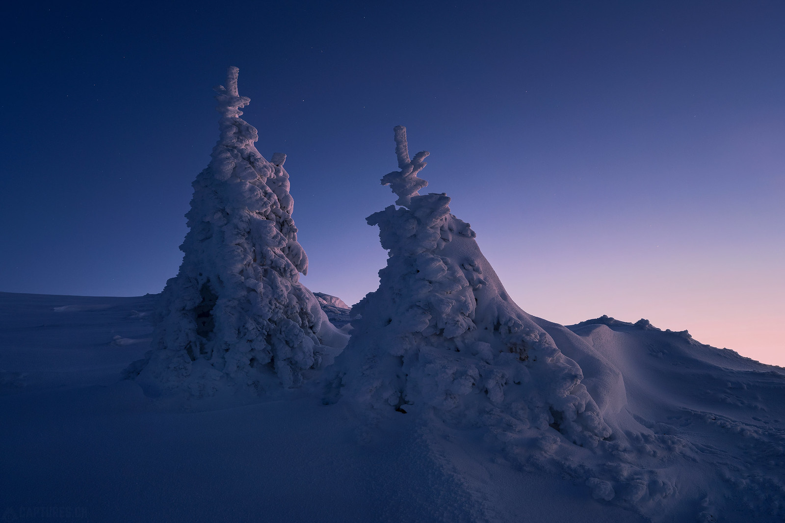 Frozen trees - Jura