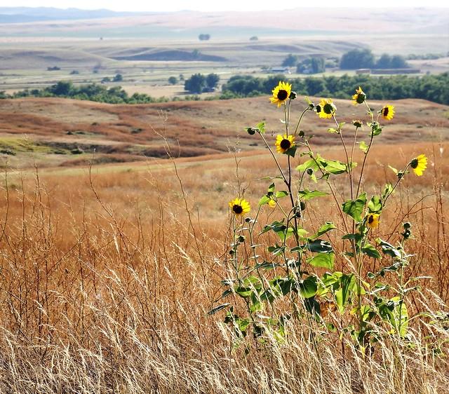 Montana - Little Big Horn - Landscape