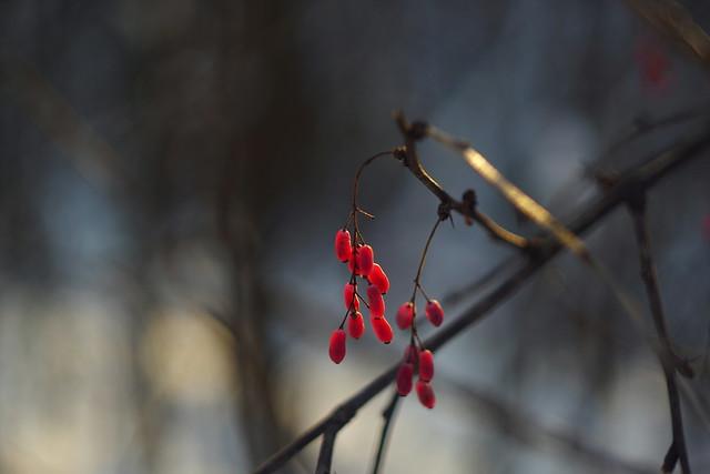 Ягоды / Berries