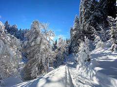 Winterland Kleinwalsertal