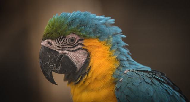 Mark the Macaw.