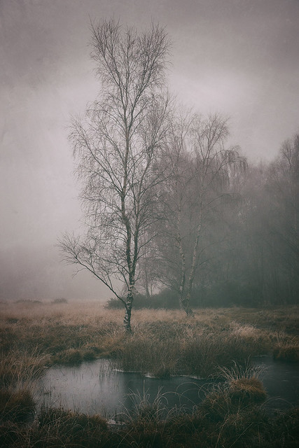 Moorland Winter Fog