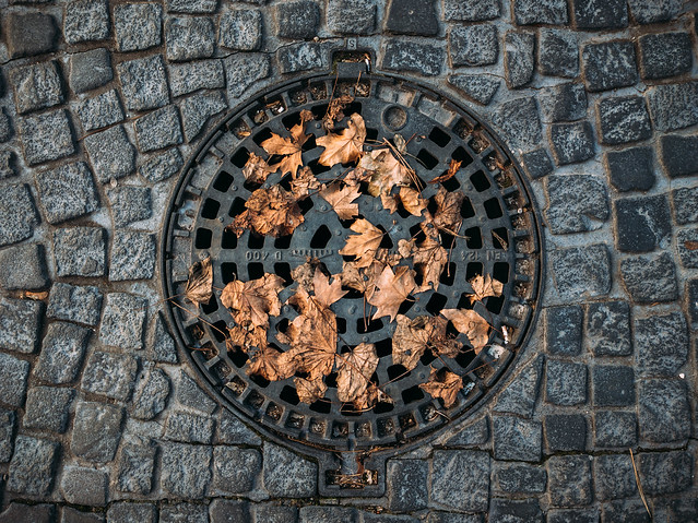 Sewer hatch covered with dry leaves