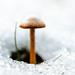 kleiner Pilz im Schnee