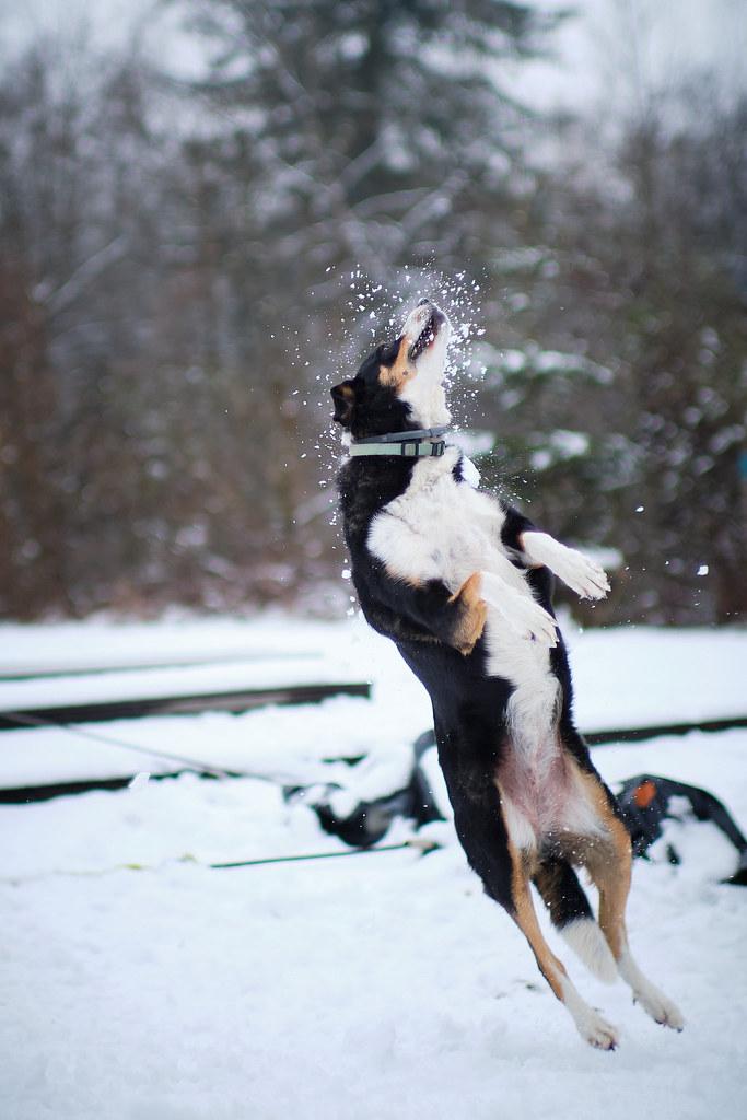 DOG JUMP (winter)