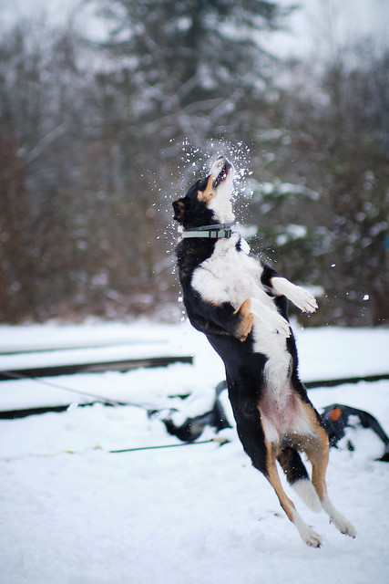 DOG JUMP (winter)