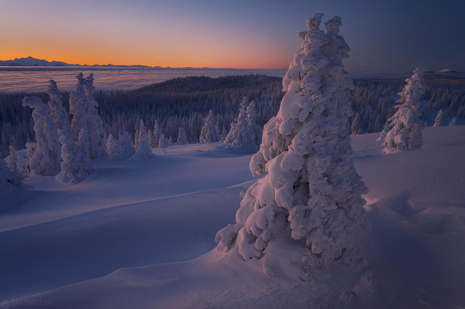 Frozen trees 3 - Jura