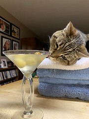2021 17/365 1/17/2021 SUNDAY - Miss Puss and the Martini