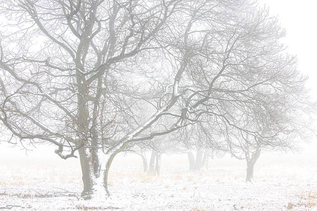 Winter Scene II