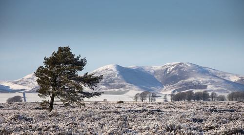 scotland midlothian gladhouse peatlands pentlandhills scaldlaw winter moor