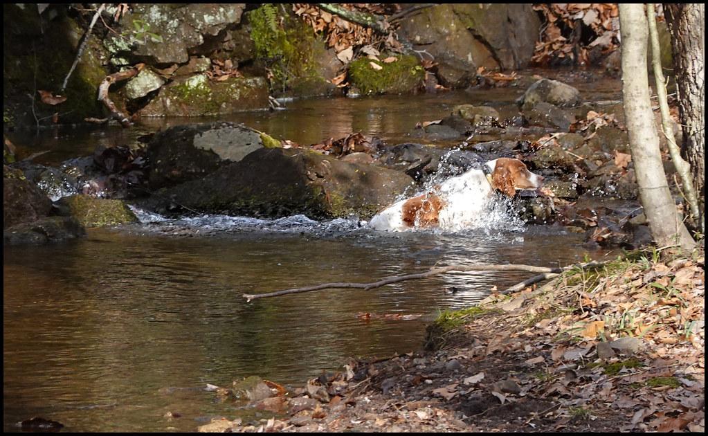 1-16-20 - Joy in the brook