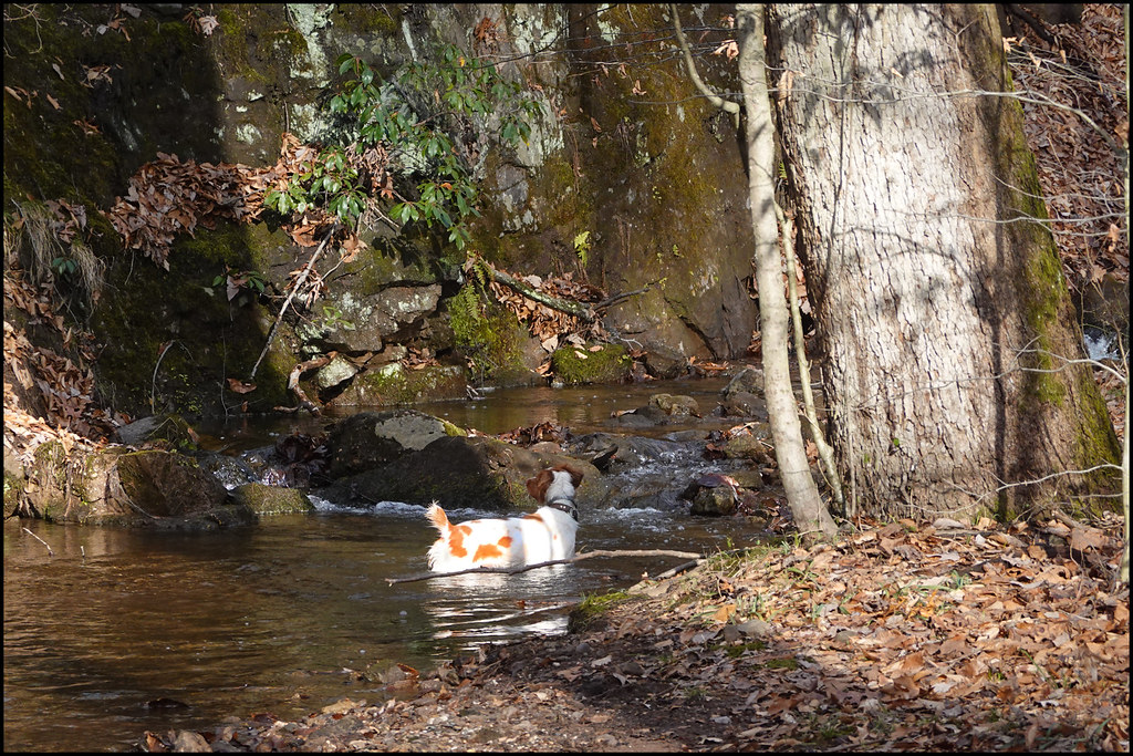1-16-20 - Bliss in the brook - 1