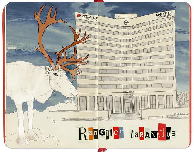 Reindeer in Murmansk // Северный олень в Мурманске