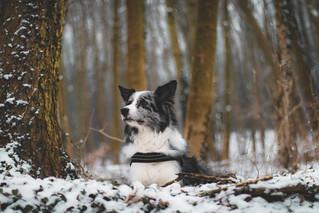 Finn in winter wonderland.