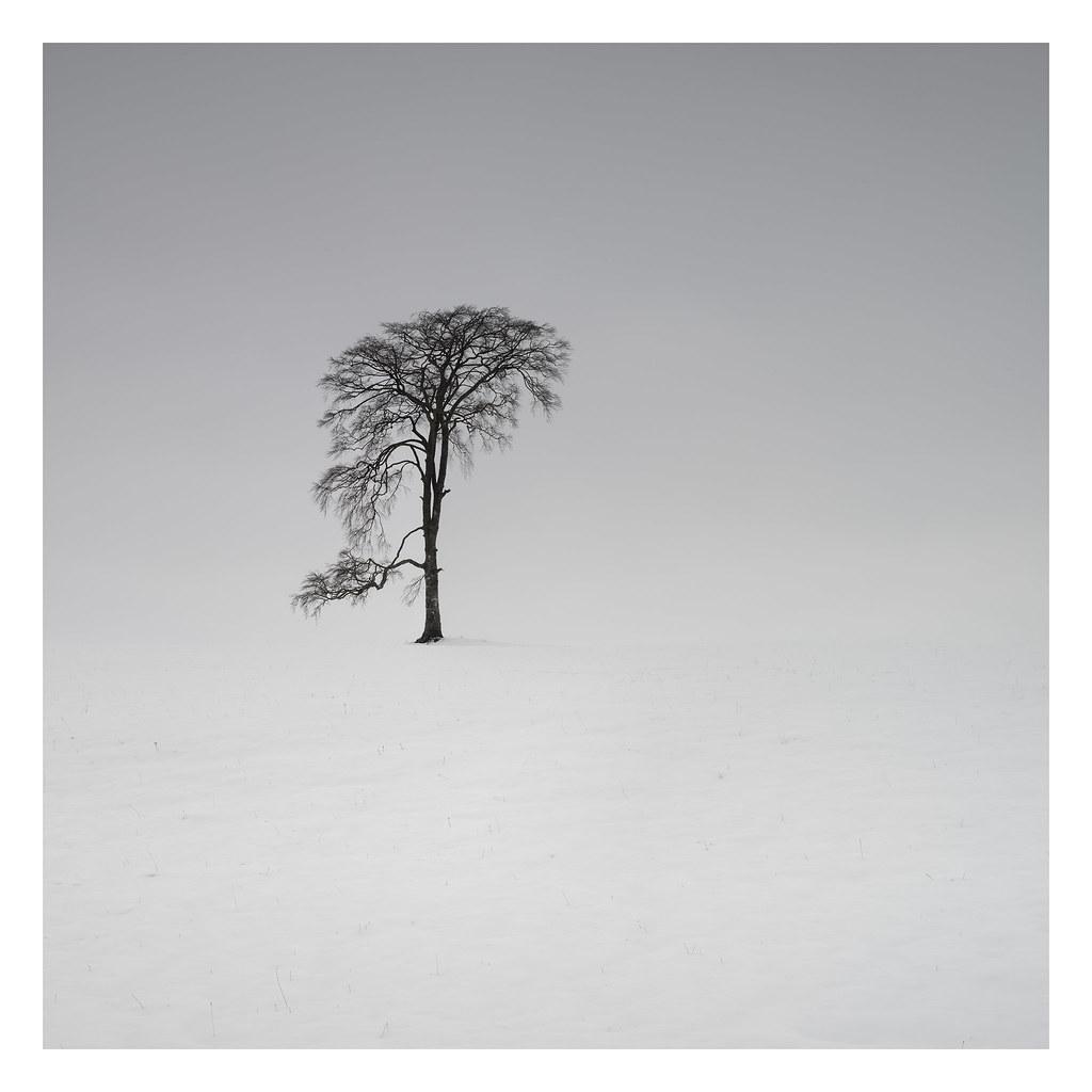 Braco lone tree