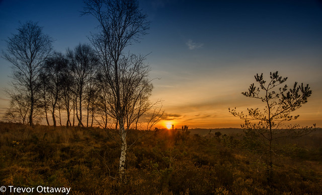 Chobham Common Sunset