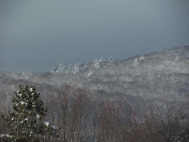 White pine whitecaps
