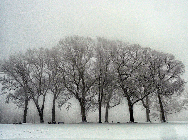 Trees in Fog and Snow - Sewanee, Tennessee