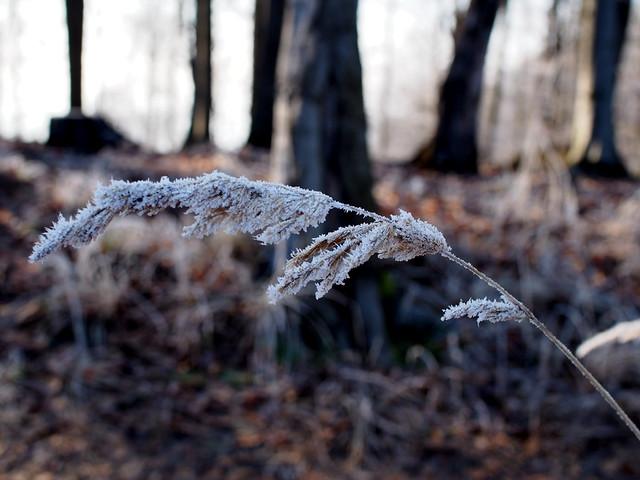 téli érintés / winter touch