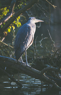 Highlighted heron