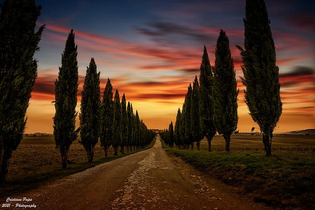 Viale Cipressi Valle Dorcia