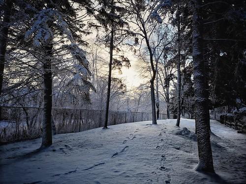 winter snow sunrise fence