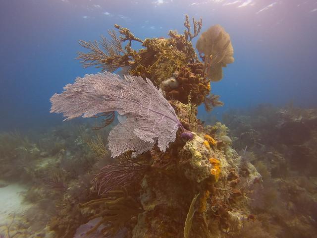 PM 22 Jan 2021 Peaceful Diving Florida Keys